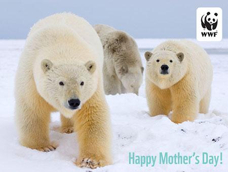 WWF Polar Bear E-Card